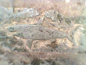fish on stone